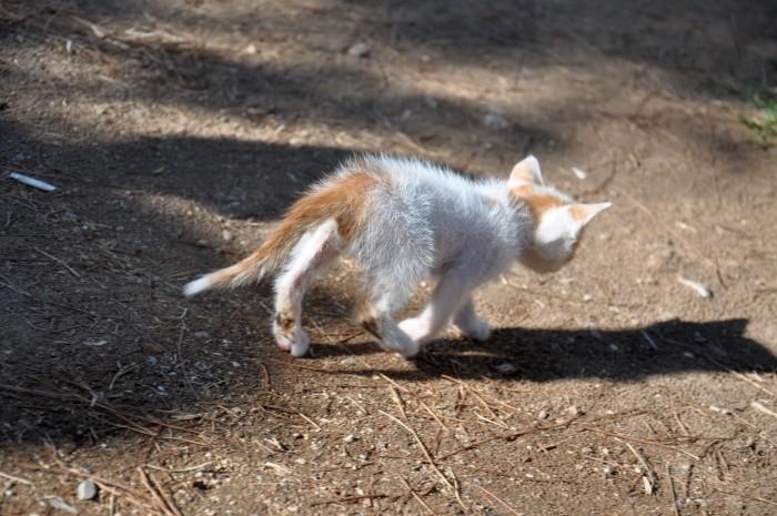 Ten kotek nie podejmuje wyzwania, jakim jest prowadzenie serwisu podróżniczego