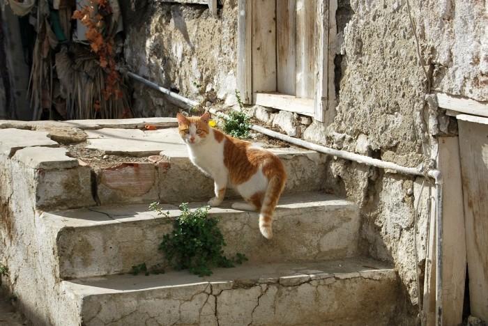 Ten kot dziwi się, że nie wszyscy jeżdżą do Turcji na własną rękę