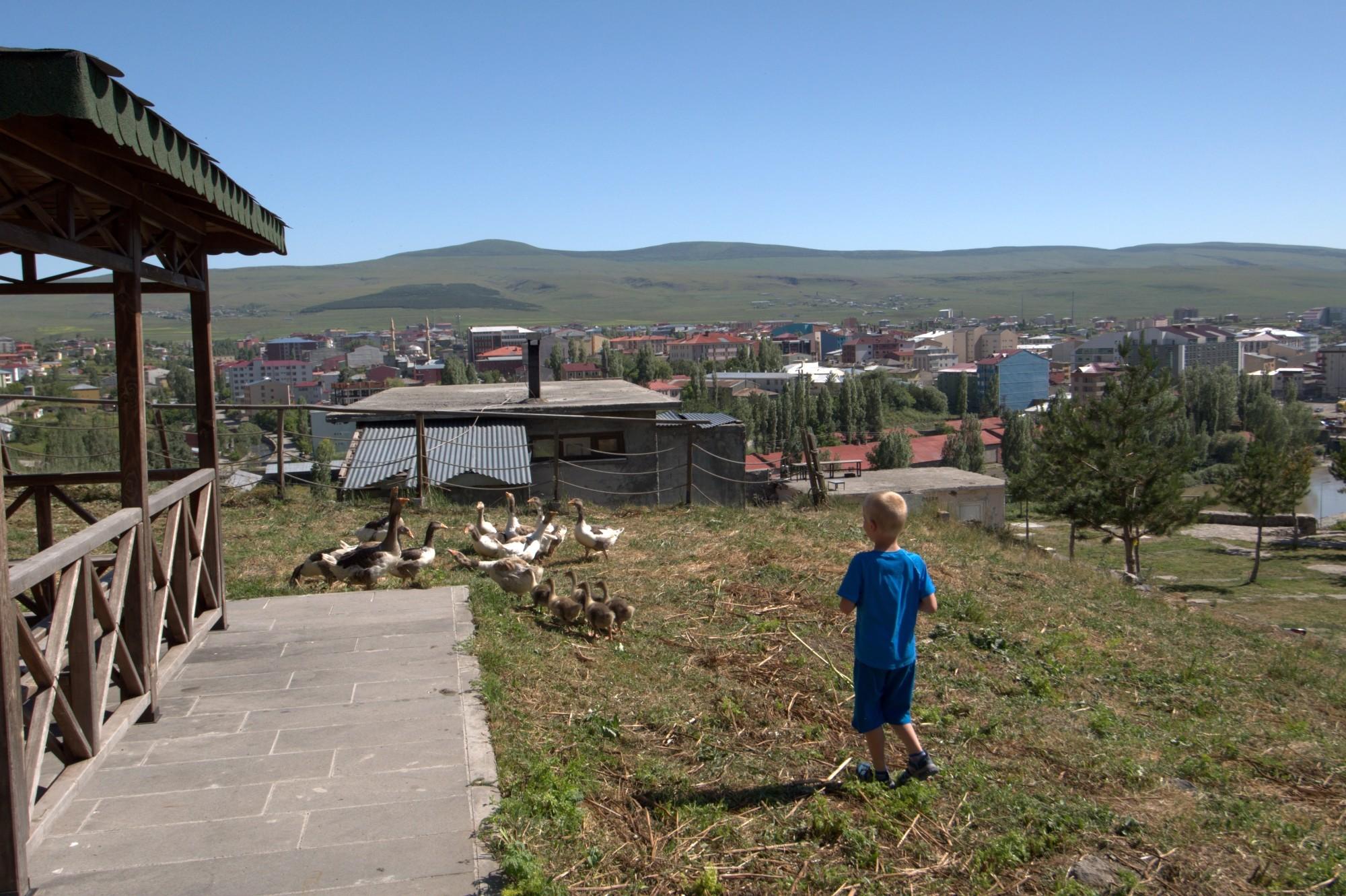 Gęsi na zamku w Ardahan