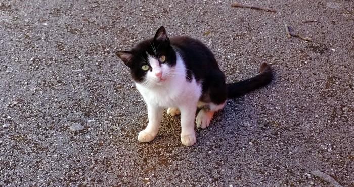 Włoski kot udający Greka piszącego o Turcji