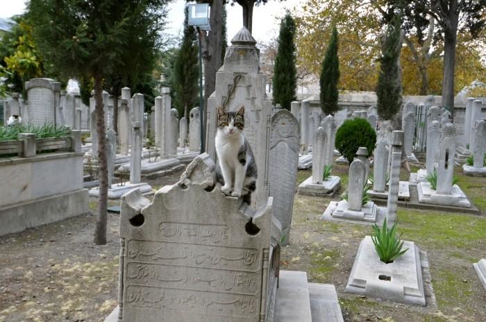Ten stambulski kotek nie jest mieszkańcem stolicy Turcji