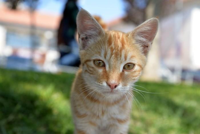 Ten kot z Avanos chce rzucić pracę i wyruszyć w szeroki świat po lekturze blogów podróżniczych
