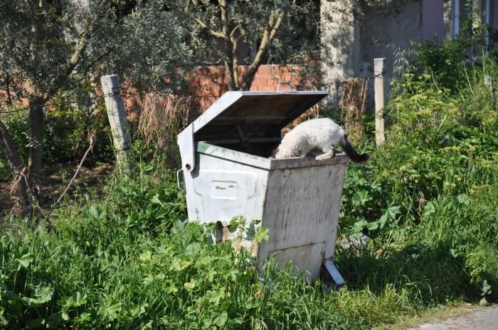 Ten kot z Izniku nie ma poczucia obciachu i minimalizuje koszty podróży poszukując pożywienia w śmietniku