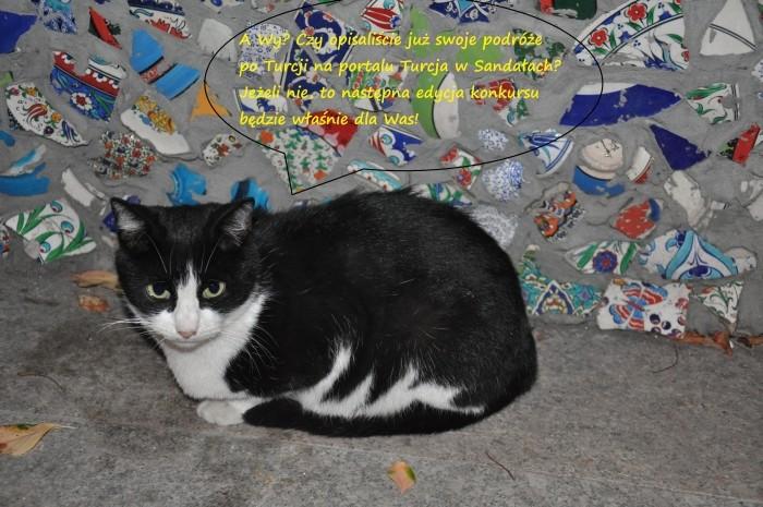 Zawsze jest dobry powód, żeby wstawić zdjęcie tureckiego kota :)