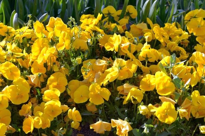 Wiosenne kwiaty dla zwycięzców konkursu