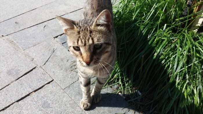 Uroczy kociak, zupełnie jak Tomek