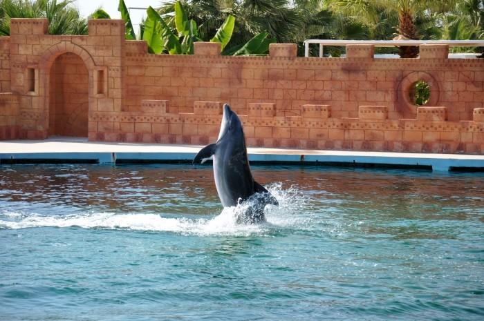 Pokaz delfinów w Sealanya