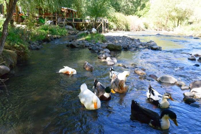 Herbaciarnia i kaczki w dolinie Ihlara
