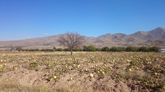 Czas jesiennych plonów