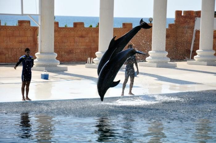 Pokaz delfinów w parku rozrywki Sealanya