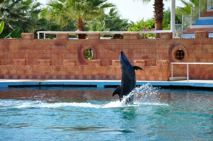 Delfin zaprasza do wspólnej zabawy