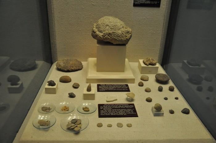 Eksponaty z Sali Historii Naturalnej