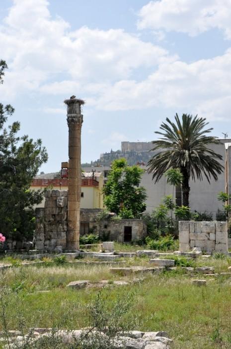 Jednyna stojąca kolumna świątyni Zeusa, a na niej - bocian w gnieździe