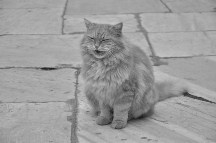 Ten stambulski kot nie dowierza, że w mieście niegdyś rządziły psy