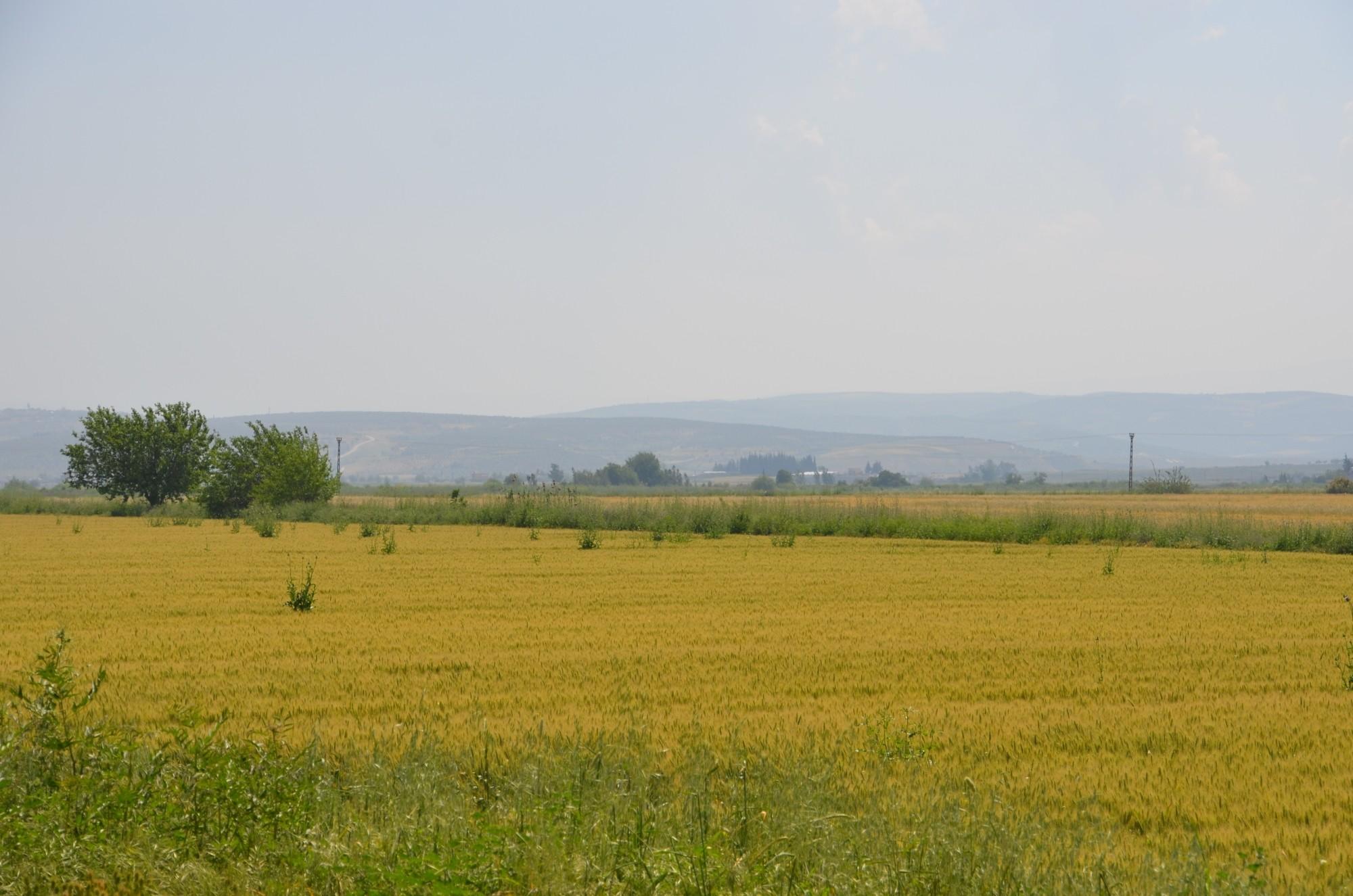 Równina Amuq