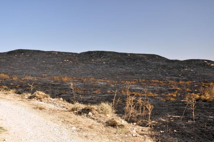 Ślady niszczycielskiej działalności ognia na wschodnim kopcu Beycesultan