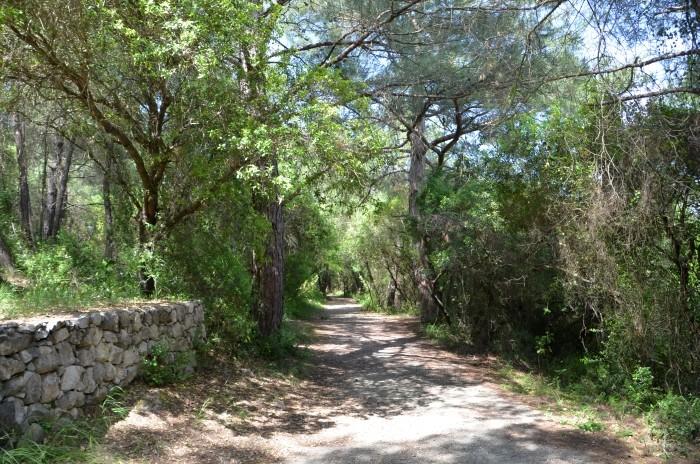 Ścieżka przez las - trasa zwiedzania Karatepe