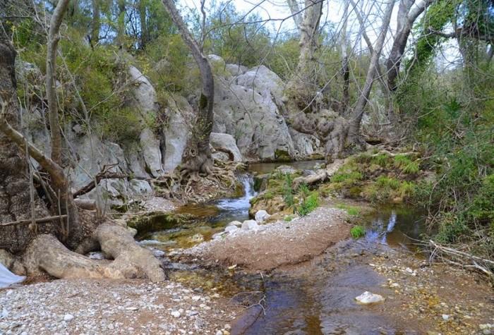 Krzaczki nad potokiem