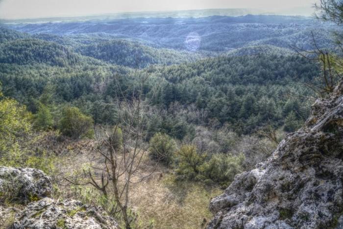 Lasy po horyzont