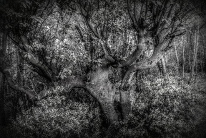Drzewo z horroru