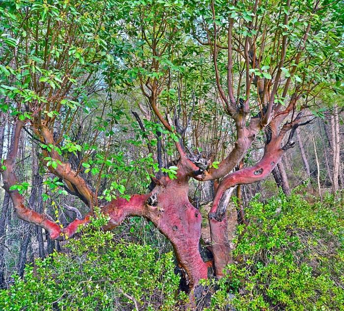 Drzewo przy wodospadzie Uçansu