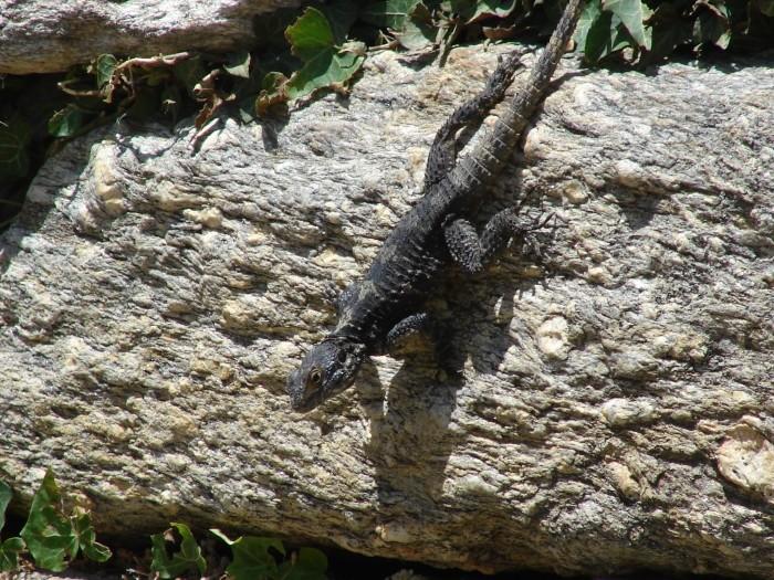 Fauna Turcji